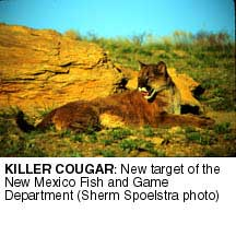 A bighorn dilemma high country news for New mexico department of game and fish