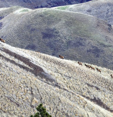 In elk poaching case, a glimpse of a simmering land conflict