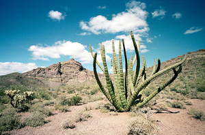 After 11 years, Organ Pipe Cactus National Monument reopens
