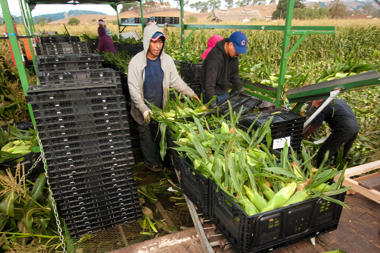 Farmers turn to prisons to fill labor needs
