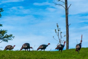 An interloper's eye-opening Thanksgiving