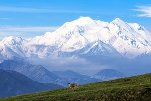 Battle of the Lands: Denali wins