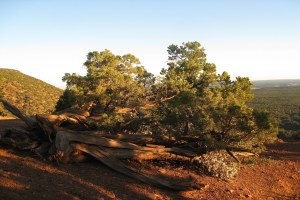 Bears Ears: Correcting an off-base argument