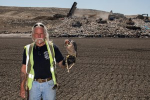 Birds of prey wielded as guardians of orchards and landfills