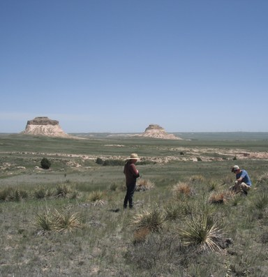 BLM launches a native seeds strategy for damaged landscapes