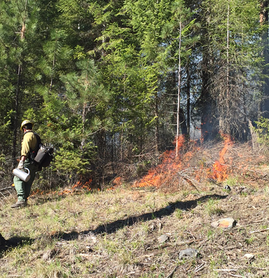 The 'ecological hate speech' developed around wildfire