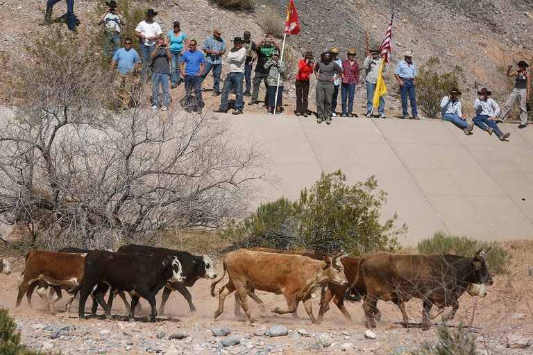 Protesters watch as cattle that belonged to rancher Cliven Bundy are released, April 12. U.S. officials ended a stand-off with hundreds of armed protesters, releasing several hundred of the 1,000 total animals back onto federal land.