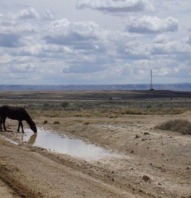 Oil and gas leasing delayed in sage grouse habitat