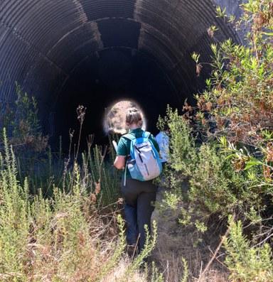 California budgets $61.5 million for wildlife crossings