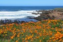 California state parks' blueprint for a more diverse future