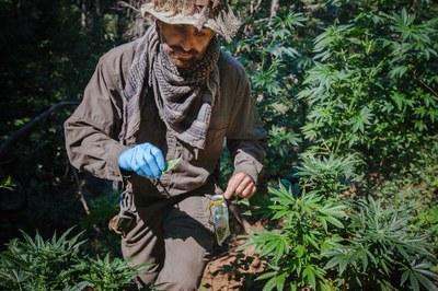 California's backcountry drug war