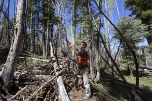 Can cutting down trees protect New Mexico's water?