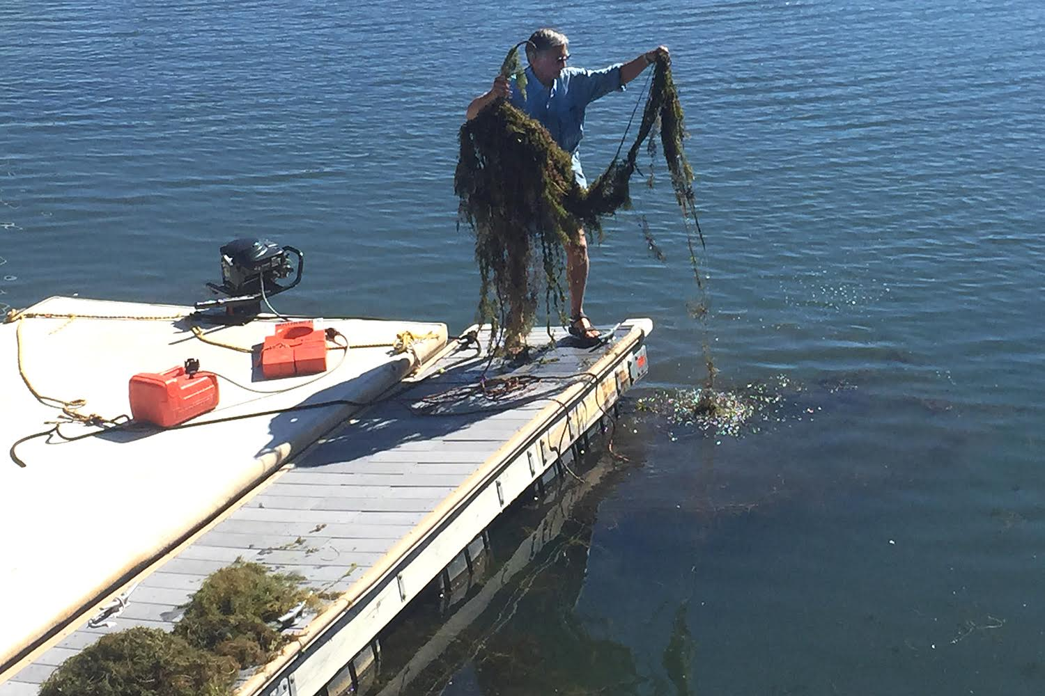 Can herbicides keep Tahoe blue? — High Country News