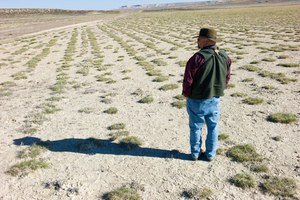 Experts: Captive breeding of sage grouse won't work