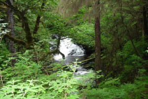 Clearcutting the Tongass National Forest is dead wrong