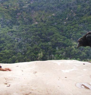 Cliff-jumpers versus condors in SoCal