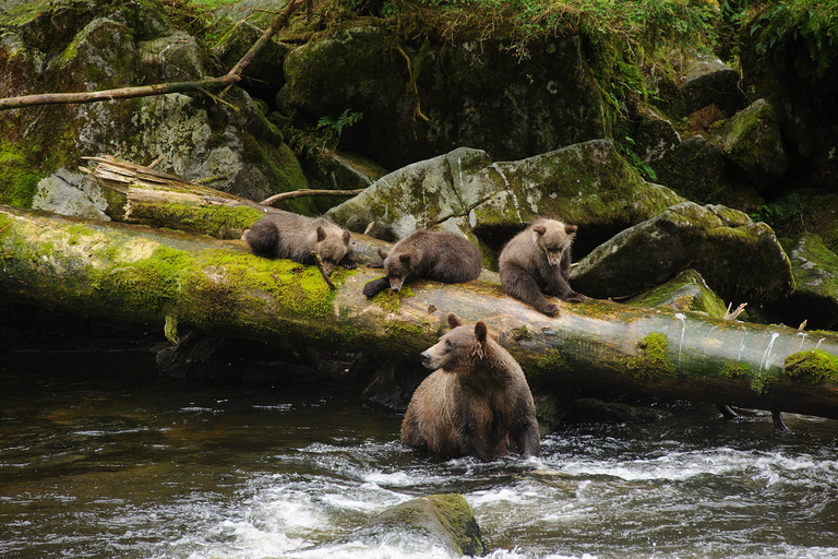 30 million acres of public land in Alaska at risk of being developed or transferred