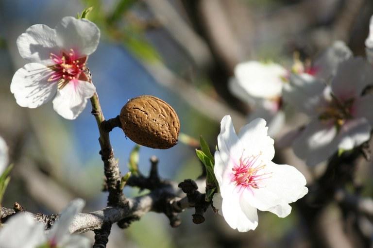almonds-jpg