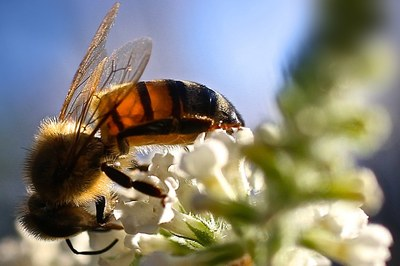 Bees, trees and a sense of unease