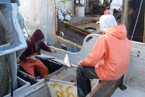 The future of Alaska's Pebble Mine — and its salmon