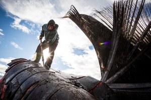 Climate threats to Alaska food security