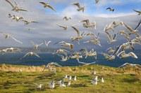 Coastal urbanization could boost biodiversity