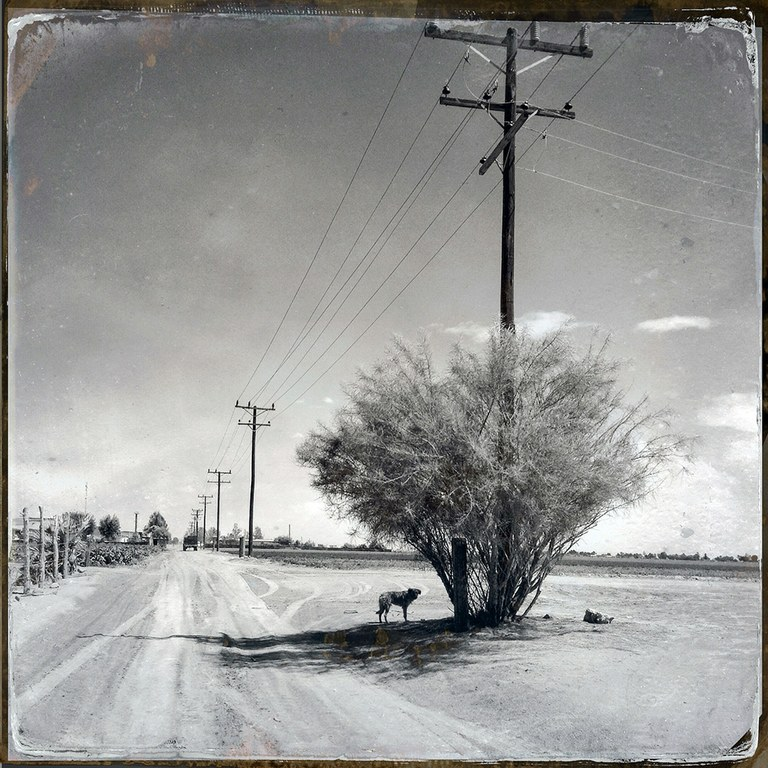 A dog finds shelter under a palo verde tree from the blazing afternoon sun just one kilometer from the Colorado River channel which the pulse flow re-animated with water only the day before. The average annual rainfall in the area, at the edge of the Sonoran Desert, is slightly less than 2 inches.