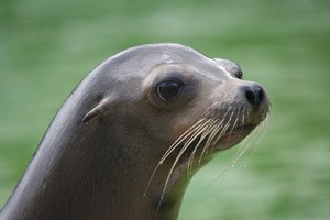 Congress seeks to weaken the Marine Mammal Protection Act