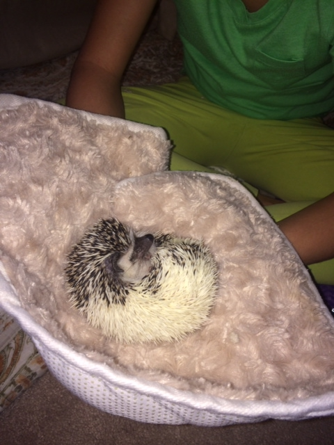 Hedgie ball