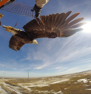 Can the feds save birds by allowing more to be killed?