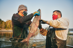 Indigenous fishers on the Columbia River confront new challenges