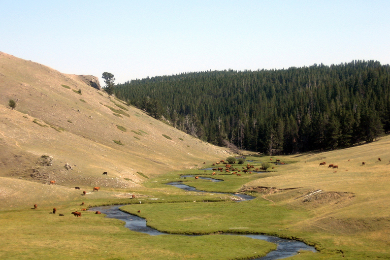 Wyoming trespass law is the latest in grazing battle