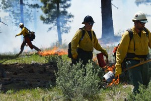 Zinke's fire memo calls for aggressive forest thinning