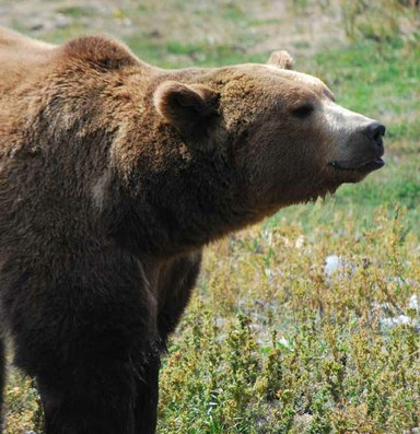 We should be proud of delisting grizzlies