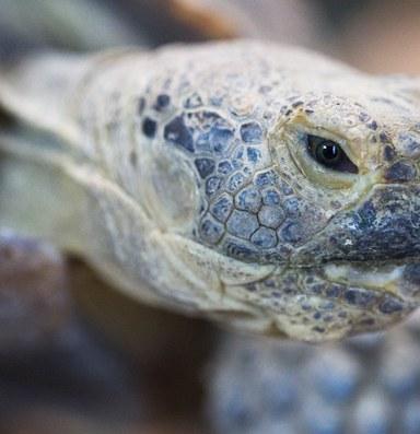 Desert tortoise militia occupies Bundy Ranch