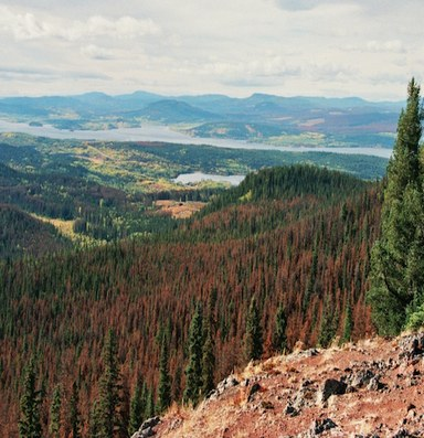 Don't blame bark beetles for fire risk