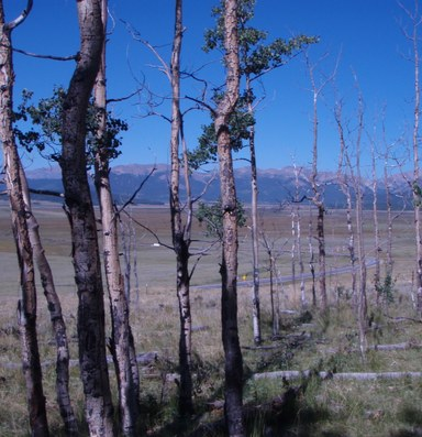 Drought damages trees' ability to store carbon