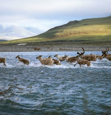 The battle over Alaska refuge oil reignites under Trump