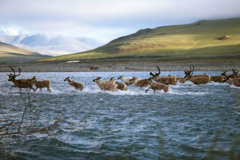 The battle over Alaska refuge oil reignites under Trump ...