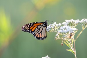 EPA to study effects of Roundup on 1,500 endangered species