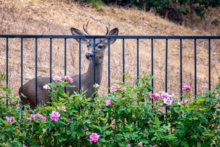 Rewilding is a two-way street