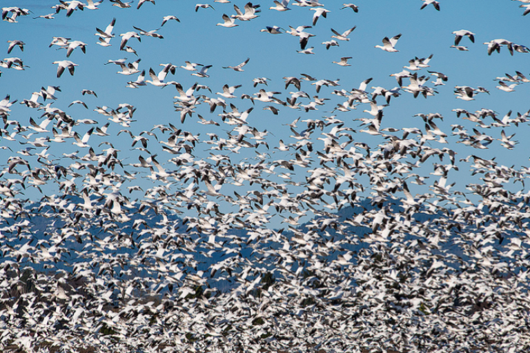 Feds move to protect birds from oil pits and power lines