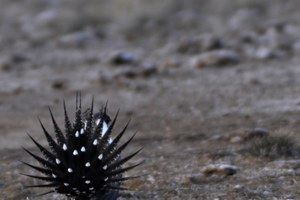 Grouseonomics: The imperiled greater sage grouse, by the numbers