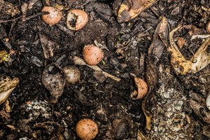 How do you beat hunger and food waste? Try compost
