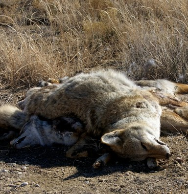 Hunting faces an ethical reckoning