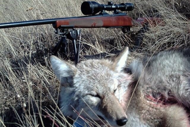 Hunting faces an ethical reckoning — High Country News