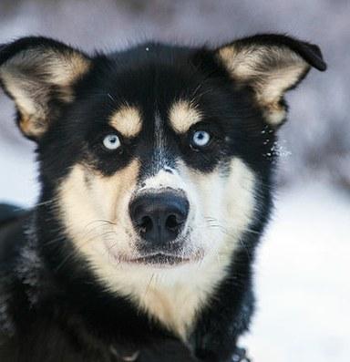 I'm thinking of naming my dog Obamacare