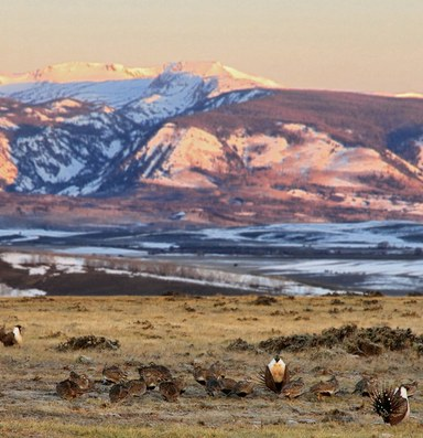 The Interior Department orders a review of sage grouse plans