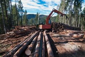 Oregon's monuments need protection from logging