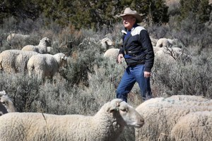 Contested domestic sheep allotment in Colorado retired